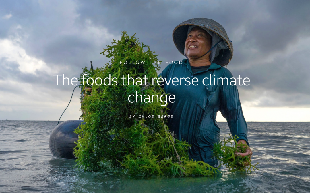 Mad som kan vende klimaforandring/ Foods that reverse climate change